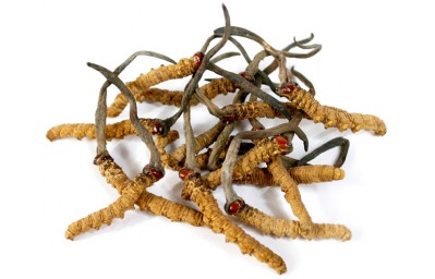 DXN Cordyceps is Chinese caterpillar fungus in capsules