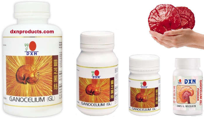 Ganocelium extract capsules and powder from DXN company