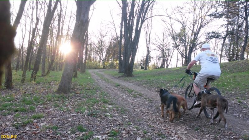Mountainbiking with three dogs in the forest