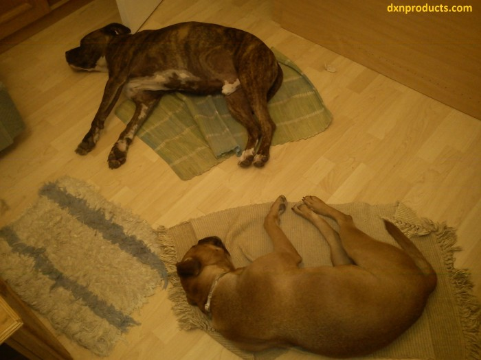Sleeping like a dog, who lives in the moment and is balanced is one of the key factors of well-being. (Li Ching Yuen, 256-year-old kung-fu master)