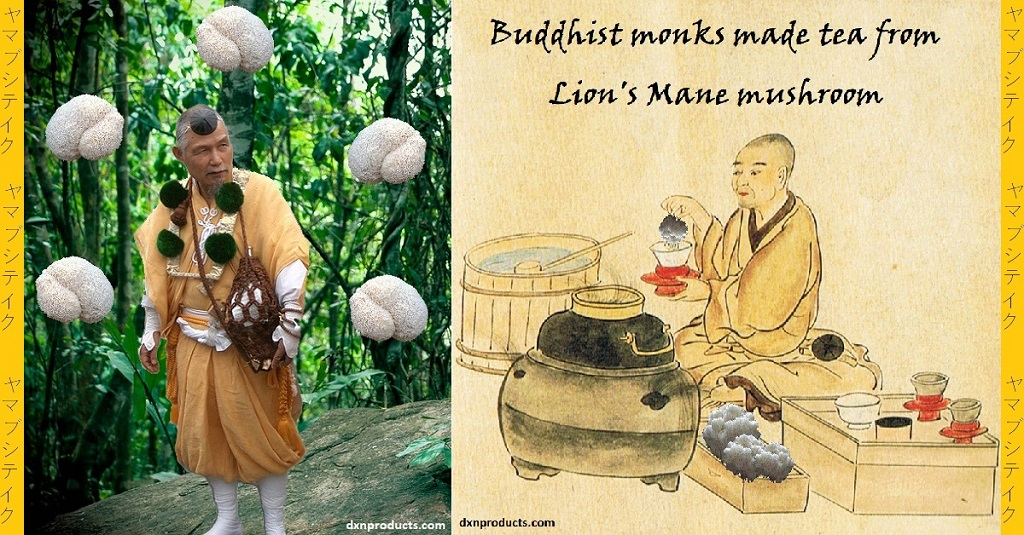 Yamabushi-monks used Lion's Mane medicinal mushroom for making tea too.