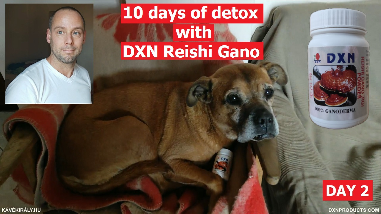 Cuteness and health: my dog with DXN Resihi Gano Powder