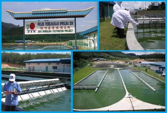 DXN Spirulina tablet is given birth to in the organic Spirulina ponds in the Alor Setar bio-farms in Malaysia.