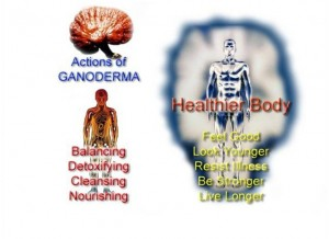 Actions of ganoderma