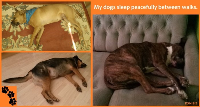 My 3 clever cute dogs sleeping on the couch and on the floor in an apartment.