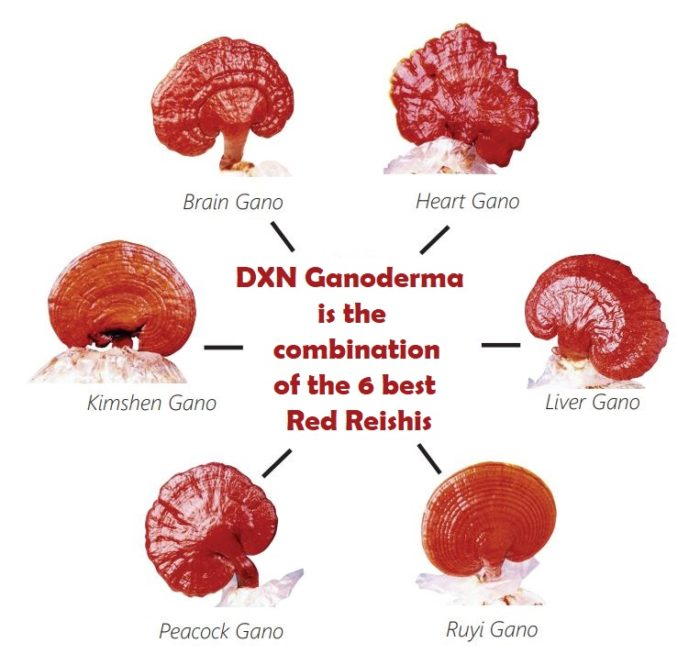 The six best types of Ganodermas are used in DXN products