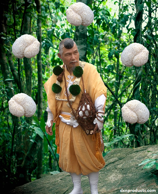 Yamabushi-take mushrooms and a Shugendo hermit monk in the forest surrounded by the legendary Hericium erinaceus (Lion's Mane) medicinal mushrooms. DXN com